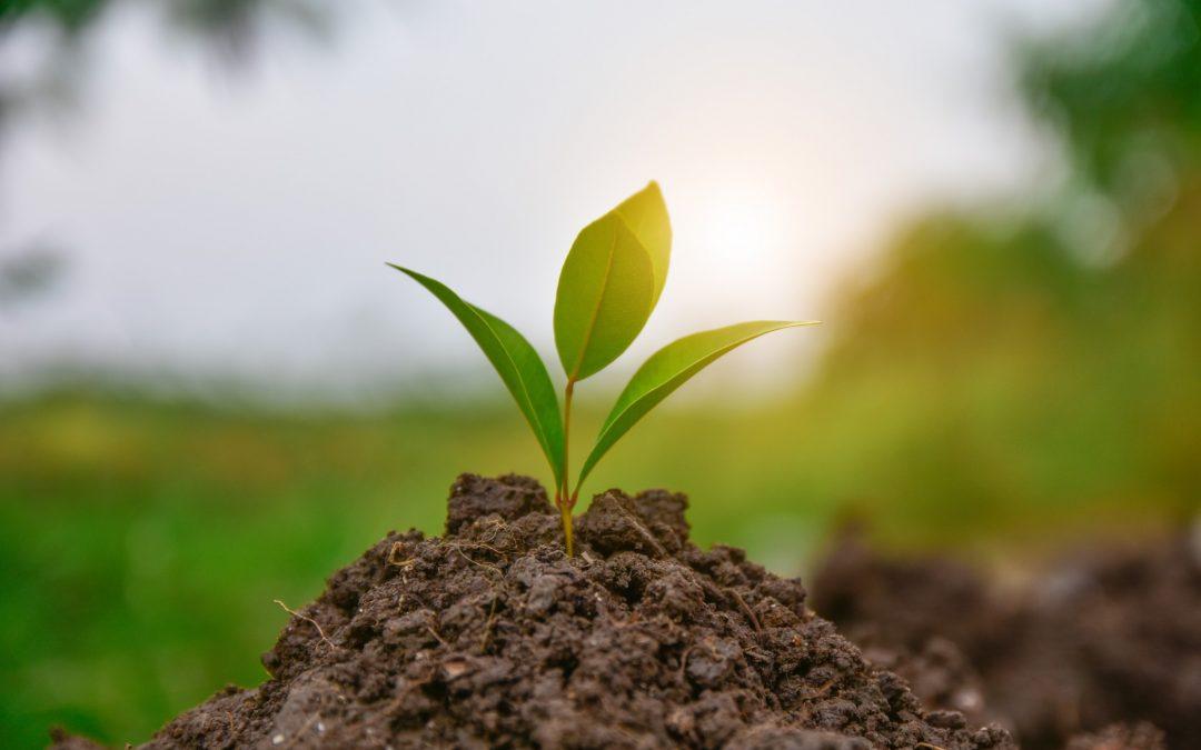 Comment créer un jardin écolo ?